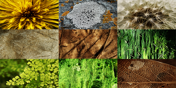 Free Goodies: Nature Textures