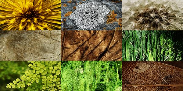 Free Goodies: Nature Textures